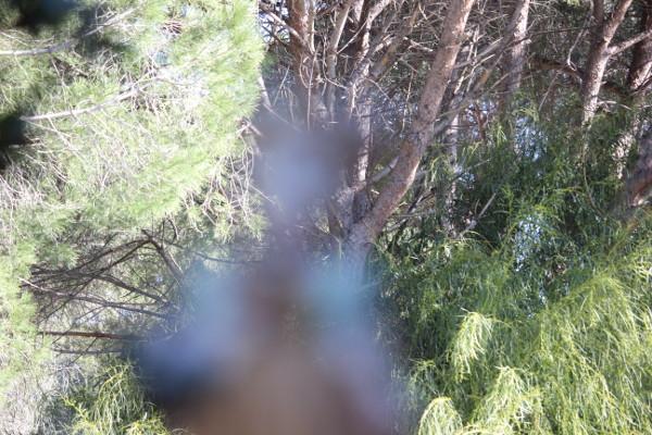 figura umana sfocatissima e diafana su sfondo nitido di boscaglia con rami di pino