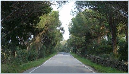 il viale di Santa Lucia in prospettiva verso l'abitato